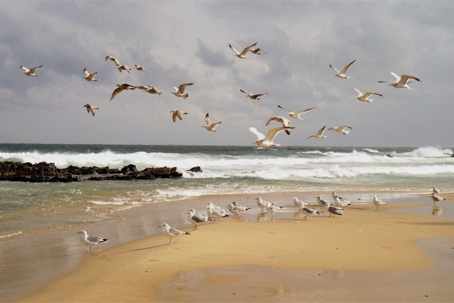 Sandy beach with gulls