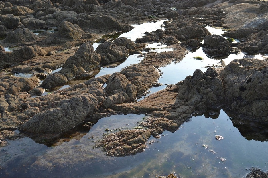 Rocky shore, tide pool